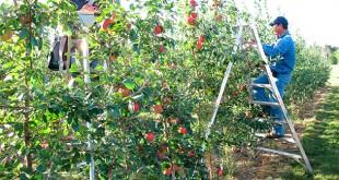 5-pomicultura
