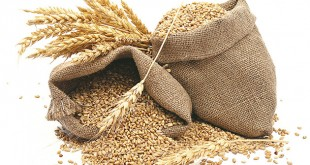 grains